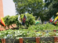 Community garden in the Bronx. Anarchist flag amidst the nations.